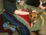 Our dog Mal, being tolerant of swaddling.